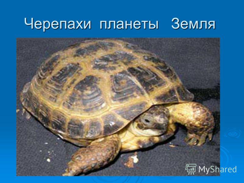 «В мире животных»