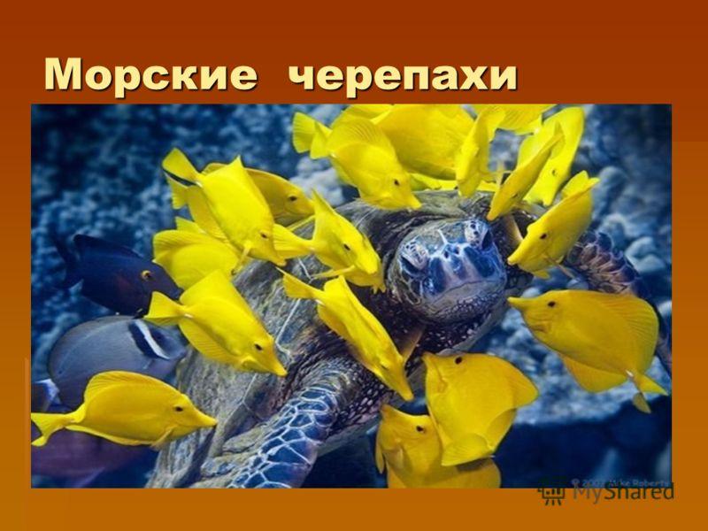 Виды черепах морские сухопутные