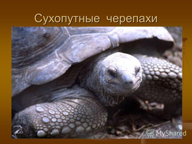 Объяснение простое: слезы у морских черепах льются по той причине, что им необходимо вывести из организма лишние соли, что накапливаются от морской пищи (рыб, водорослей).Вот они и выводят её вместе с водой, которая течёт из глаз.