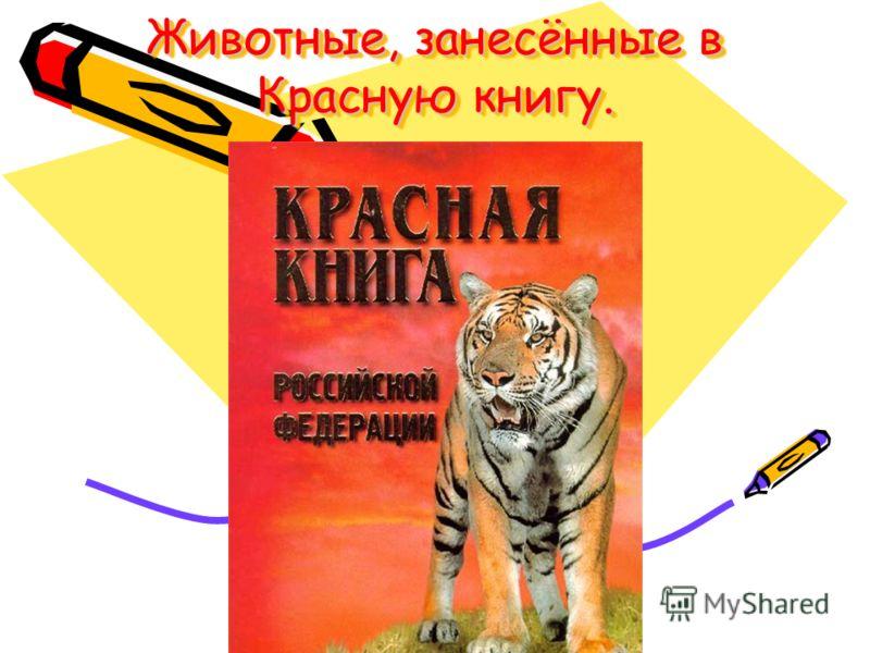 Животные, занесённые в Красную книгу. Животные, занесённые в Красную книгу.