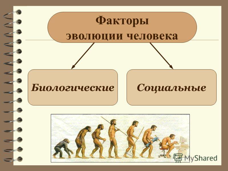 Факторы эволюции человека БиологическиеСоциальные