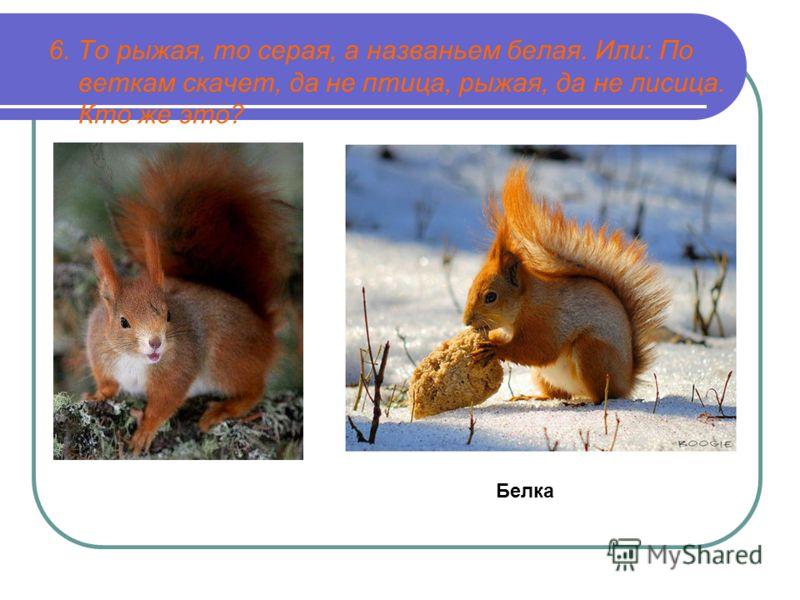 6. То рыжая, то серая, а названьем белая. Или: По веткам скачет, да не птица, рыжая, да не лисица. Кто же это? Белка