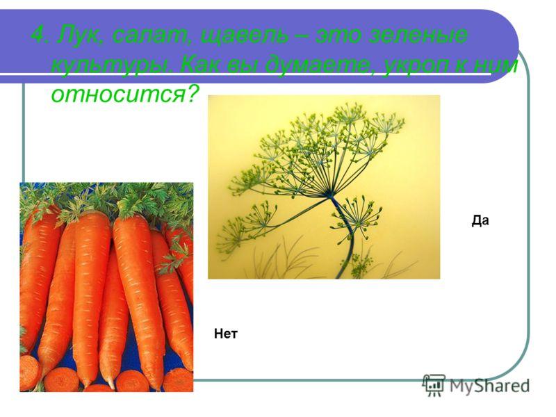 4. Лук, салат, щавель – это зеленые культуры. Как вы думаете, укроп к ним относится? Да Нет