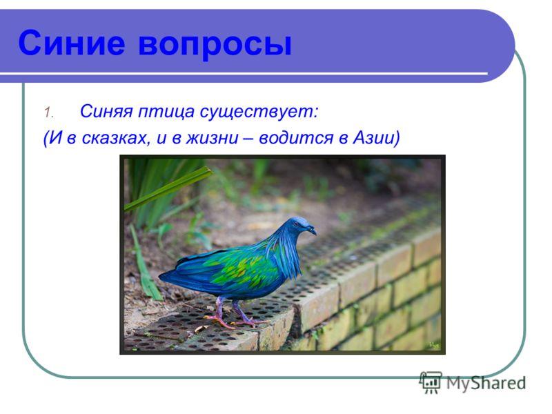Синие вопросы 1. Синяя птица существует: (И в сказках, и в жизни – водится в Азии)