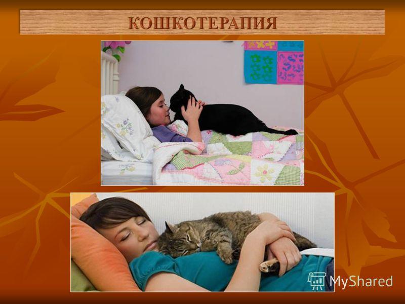В любом случае лечение кошками начинается с того, что вы должны взять любимицу на руки и погладить ее: через ваши пальцы и ладони кошка и окажет на вас самое целебное воздействие. В тяжелых случаях кошки приходят и ложатся на ваше больное место самос