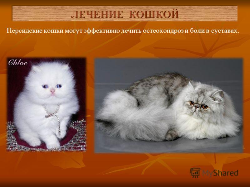 Разные породы кошек оказывать разное воздействие на наш организм, и лечат разные болезни. Длинношерстные кошки (ангорские, персидские, сибирские) – отлично справляются с раздражительностью, депрессией и бессонницей хозяина.
