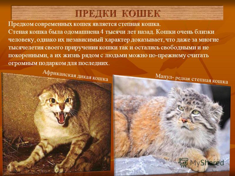 Родиной кошек считается Древний Египет, который славился культом кошек. Кошек считали