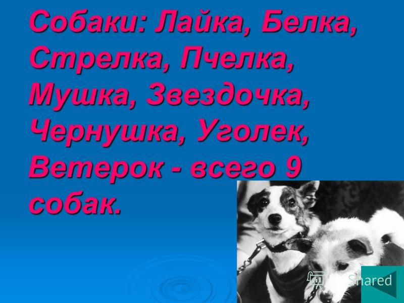 Собаки: Лайка, Белка, Стрелка, Пчелка, Мушка, Звездочка, Чернушка, Уголек, Ветерок - всего 9 собак.
