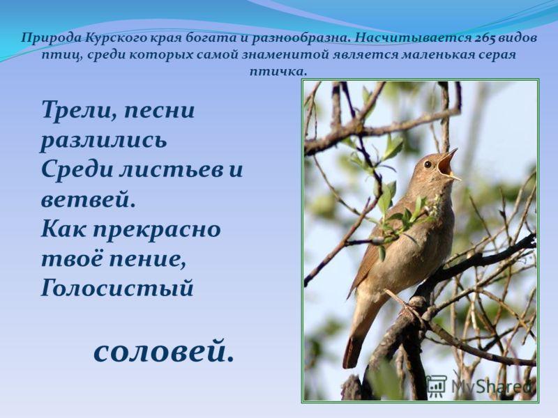 Природа Курского края богата и разнообразна. Насчитывается 265 видов птиц, среди которых самой знаменитой является маленькая серая птичка. Трели, песни разлились Среди листьев и ветвей. Как прекрасно твоё пение, Голосистый соловей.