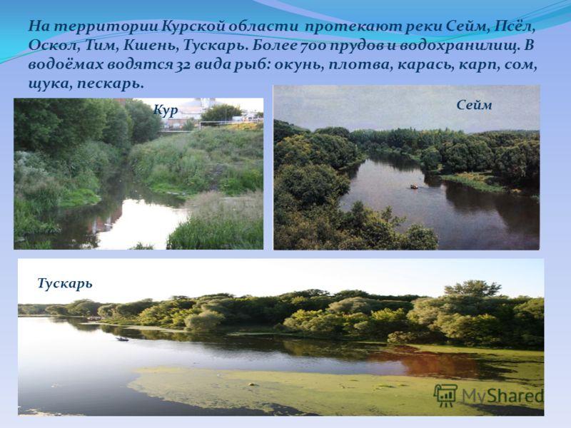 На территории Курской области протекают реки Сейм, Псёл, Оскол, Тим, Кшень, Тускарь. Более 700 прудов и водохранилищ. В водоёмах водятся 32 вида рыб: окунь, плотва, карась, карп, сом, щука, пескарь. Сейм Кур Тускарь