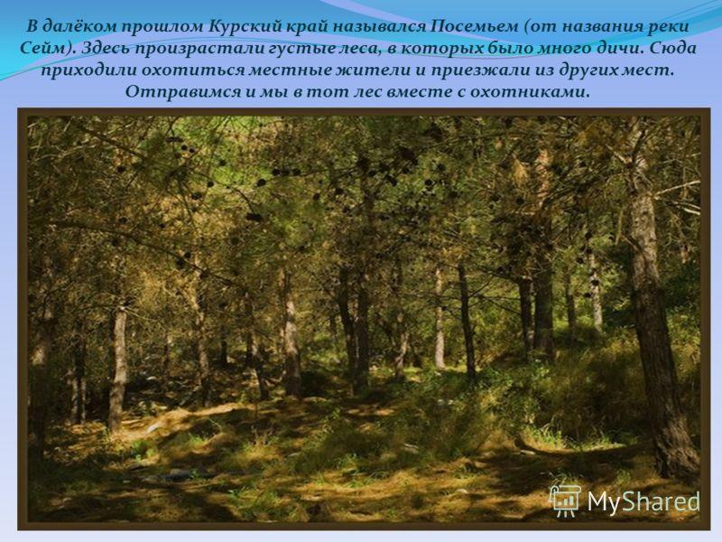 В далёком прошлом Курский край назывался Посемьем (от названия реки Сейм). Здесь произрастали густые леса, в которых было много дичи. Сюда приходили охотиться местные жители и приезжали из других мест. Отправимся и мы в тот лес вместе с охотниками.