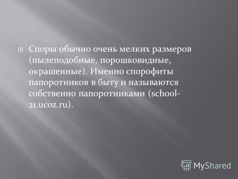Споры обычно очень мелких размеров (пылеподобные, порошковидные, окрашенные). Именно спорофиты папоротников в быту и называются собственно папоротниками (school- 21.ucoz.ru).