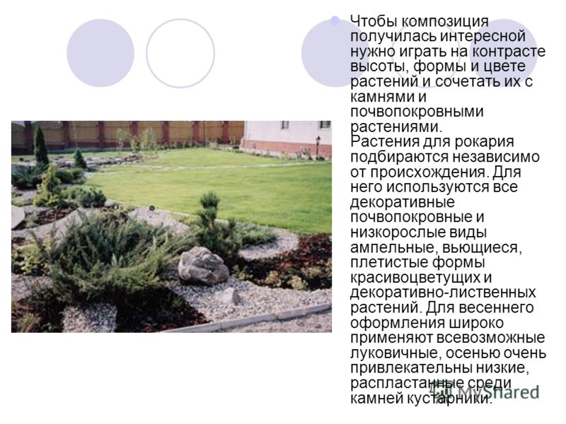 Чтобы композиция получилась интересной нужно играть на контрасте высоты, формы и цвете растений и сочетать их с камнями и почвопокровными растениями. Растения для рокария подбираются независимо от происхождения. Для него используются все декоративные