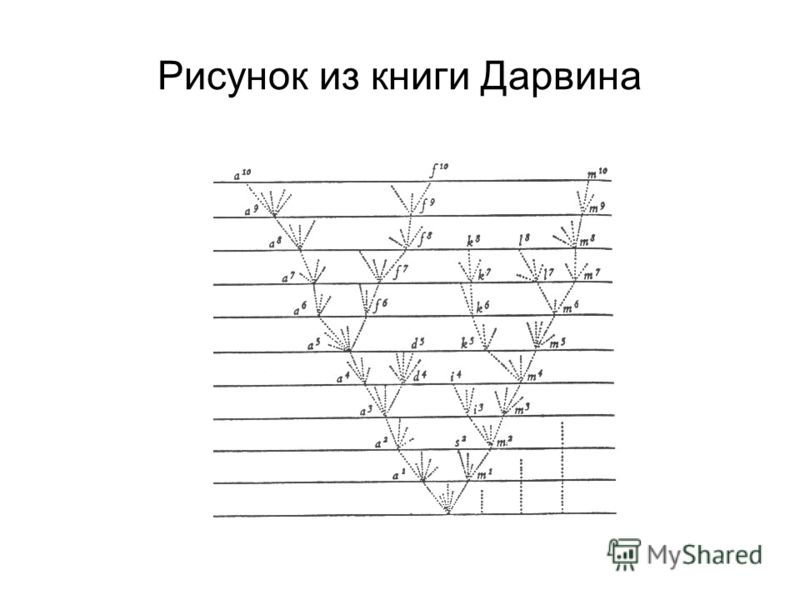 Рисунок из книги Дарвина