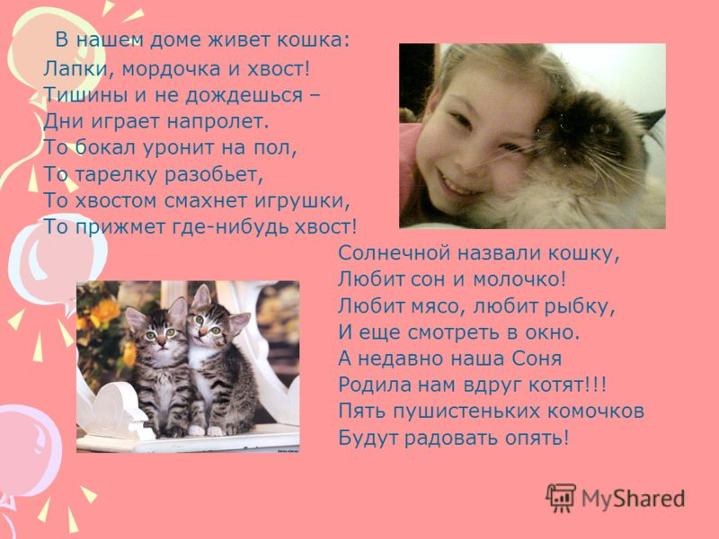 В нашем доме живет кошка: Лапки, мордочка и хвост! Тишины и не дождешься – Дни играет напролет. То бокал уронит на пол, То тарелку разобьет, То хвостом смахнет игрушки, То прижмет где-нибудь хвост! Солнечной назвали кошку, Любит сон и молочко! Любит