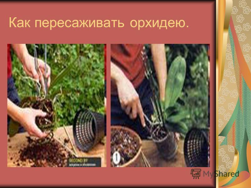 Как пересаживать орхидею.