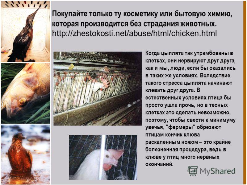 Покупайте только ту косметику или бытовую химию, которая производится без страдания животных. http://zhestokosti.net/abuse/html/chicken.html Когда цыплята так утрамбованы в клетках, они нервируют друг друга, как и мы, люди, если бы оказались в таких