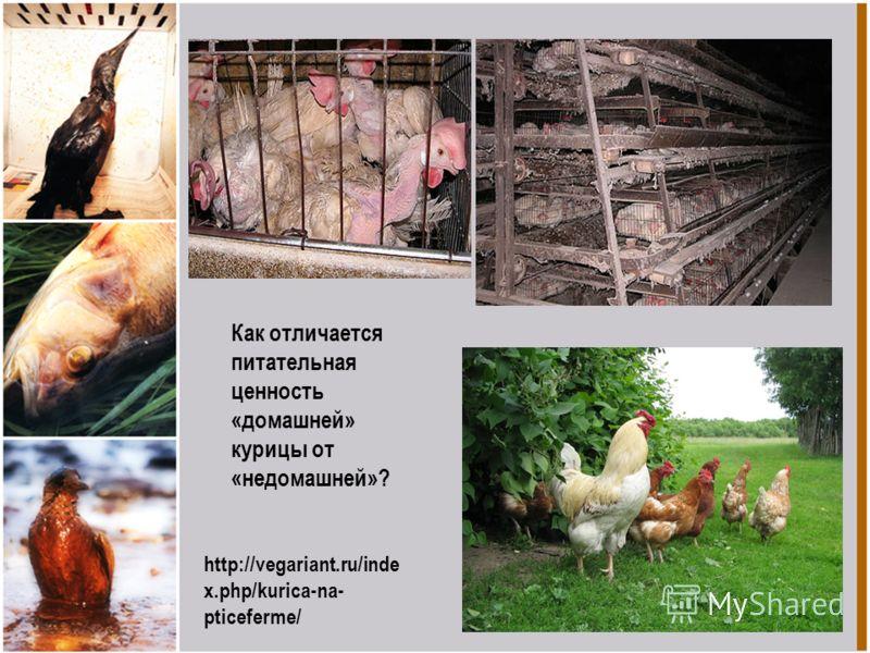 http://vegariant.ru/inde x.php/kurica-na- pticeferme/ Как отличается питательная ценность «домашней» курицы от «недомашней»?