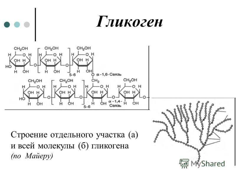 Гликоген Строение отдельного участка (а) и всей молекулы (б) гликогена (по Майеру)