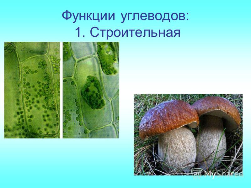 Функции углеводов: 1. Строительная