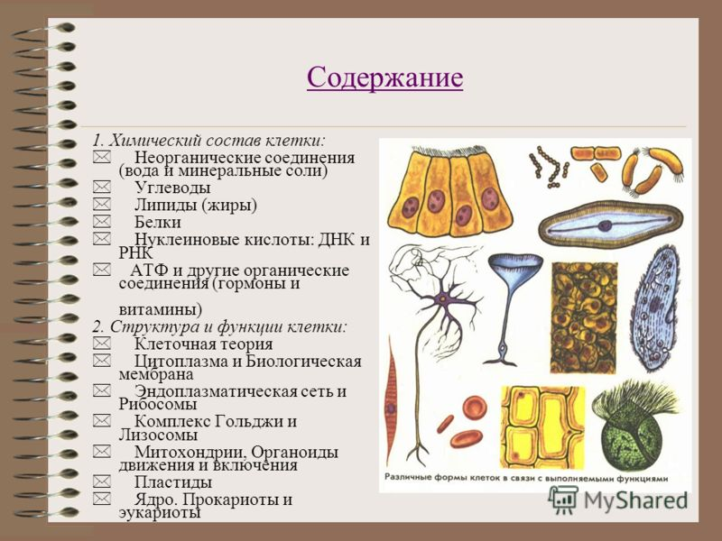 Содержание 1. Химический состав клетки: * Неорганические соединения (вода и минеральные соли) * Углеводы * Липиды (жиры) * Белки * Нуклеиновые кислоты: ДНК и РНК * АТФ и другие органические соединения (гормоны и витамины) 2. Структура и функции клетк