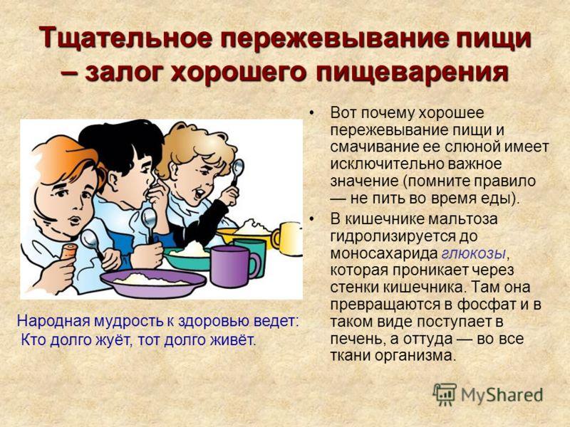 Тщательное пережевывание пищи – залог хорошего пищеварения Вот почему хорошее пережевывание пищи и смачивание ее слюной имеет исключительно важное значение (помните правило не пить во время еды). В кишечнике мальтоза гидролизируется до моносахарида г