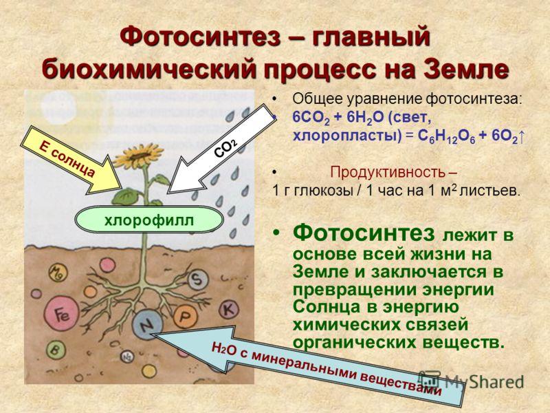 Фотосинтез – главный биохимический процесс на Земле Н 2 О с минеральными веществами Е солнца СО 2 хлорофилл Общее уравнение фотосинтеза: 6СО 2 + 6Н 2 О (свет, хлоропласты) = С 6 Н 12 О 6 + 6О 2 Продуктивность – 1 г глюкозы / 1 час на 1 м 2 листьев. Ф