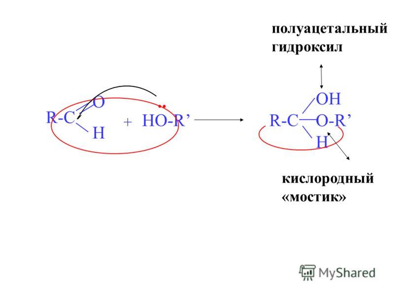 R-C O H + HO-RR-C OH H O-.. полуацетальный гидроксил R кислородный «мостик»