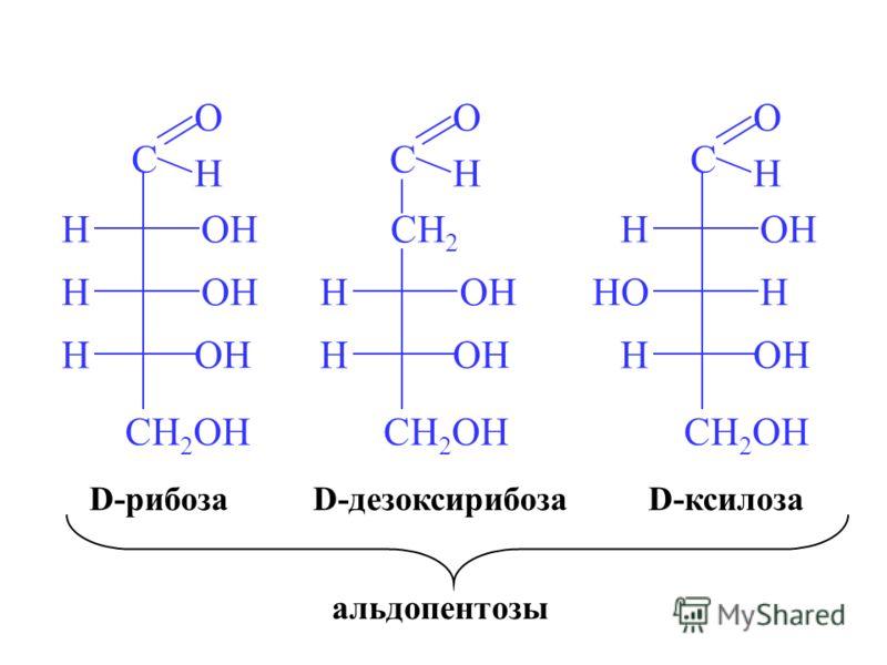 C O H H OH CH 2 OH H OH HCH 2 C O H H OH CH 2 OH H OH C O H H H CH 2 OH HO OH H D-рибозаD-ксилозаD-дезоксирибоза альдопентозы