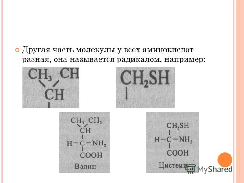 Другая часть молекулы у всех аминокислот разная, она называется радикалом, например: