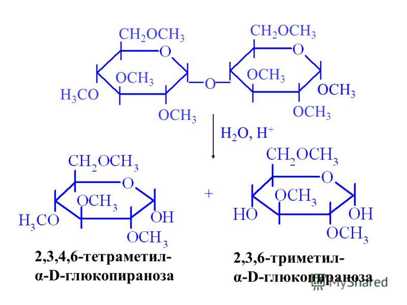 OCH 3 H 3 CO CH 2 OCH 3 OCH 3 O CH 2 OCH 3 H 2 O, H + 2,3,4,6-тетраметил- α-D-глюкопираноза + 2,3,6-триметил- α-D-глюкопираноза