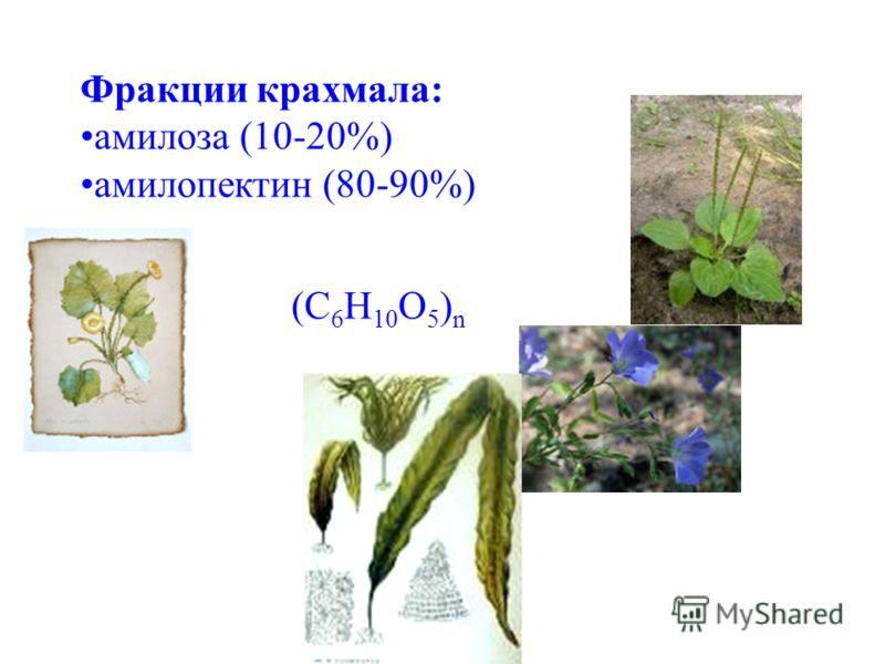 Фракции крахмала: амилоза (10-20%) амилопектин (80-90%) (C 6 H 10 O 5 ) n