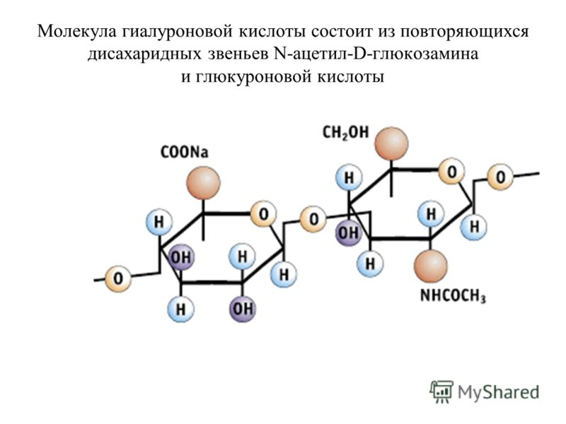 Молекула гиалуроновой кислоты состоит из повторяющихся дисахаридных звеньев N-ацетил-D-глюкозамина и глюкуроновой кислоты