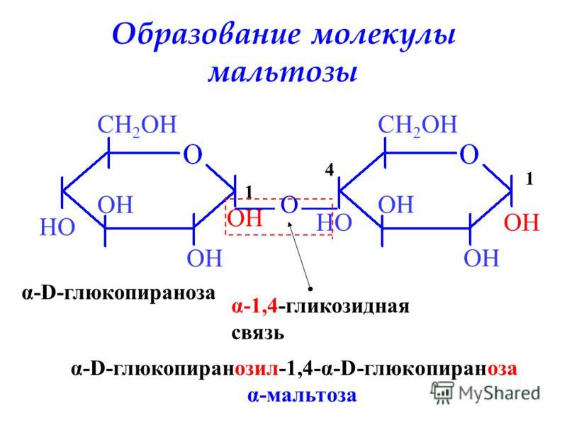 Образование молекулы мальтозы OH HO CH 2 OH 1 α-D-глюкопираноза HOOH CH 2 OH 1 4 O α-1,4-гликозидная связь α-D-глюкопиранозил-1,4-α-D-глюкопираноза α-мальтоза