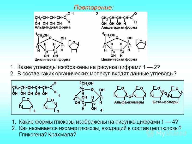 Повторение: 1.Какие углеводы изображены на рисунке цифрами 1 2? 2.В состав каких органических молекул входят данные углеводы? 1.Какие формы глюкозы изображены на рисунке цифрами 1 4? 2.Как называется изомер глюкозы, входящий в состав целлюлозы? Глико