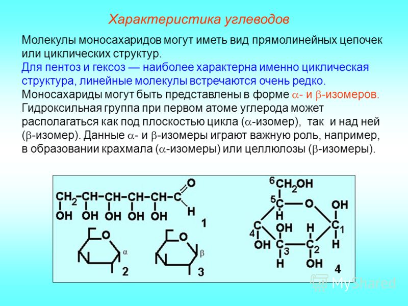 Характеристика углеводов Молекулы моносахаридов могут иметь вид прямолинейных цепочек или циклических структур. Для пентоз и гексоз наиболее характерна именно циклическая структура, линейные молекулы встречаются очень редко. Моносахариды могут быть п