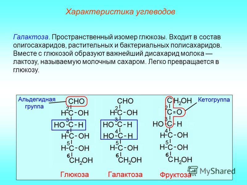 Характеристика углеводов Галактоза. Пространственный изомер глюкозы. Входит в состав олигосахаридов, растительных и бактериальных полисахаридов. Вместе с глюкозой образуют важнейший дисахарид молока лактозу, называемую молочным сахаром. Легко превращ