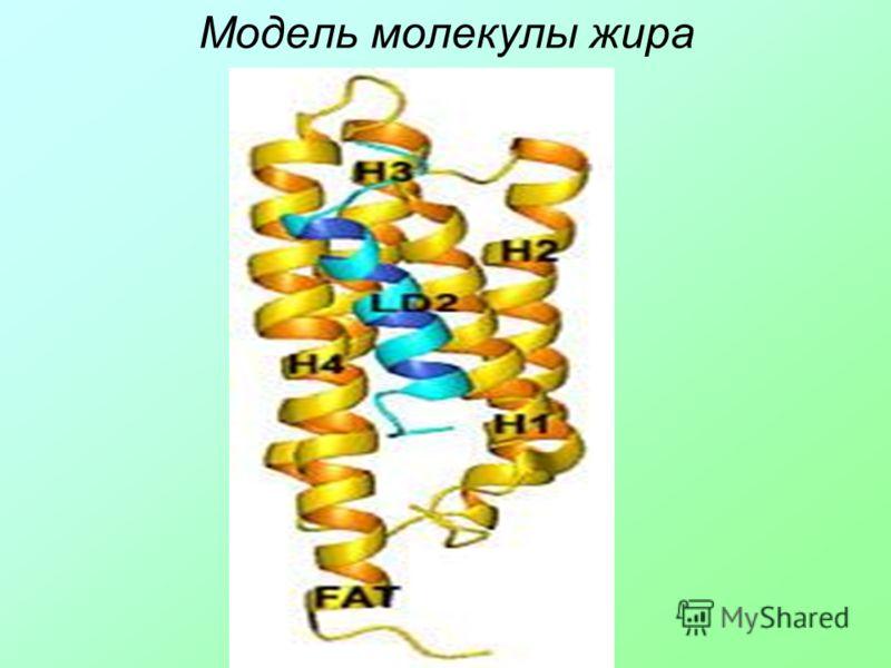 Модель молекулы жира