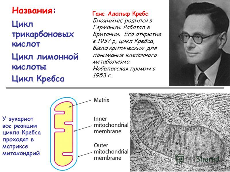Названия: Цикл трикарбоновых кислот Цикл лимонной кислоты Цикл Кребса У эукариот все реакции цикла Кребса проходят в матриксе митохондрий Ганс Адольф Кребс Биохимик; родился в Германии. Работал в Британии. Его открытие в 1937 р, цикл Кребса, было кри