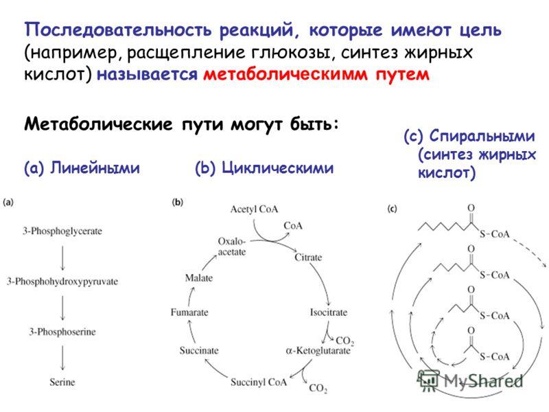 (a) Линейными (b) Циклическими (c) Спиральными (синтез жирных кислот) Последовательность реакций, которые имеют цель (например, расщепление глюкозы, синтез жирных кислот) наз ы вается метаболич еским м путем Метаболические пути могут быть: