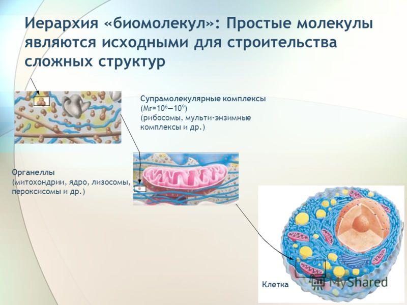 10 Иерархия «биомолекул»: Простые молекулы являются исходными для строительства сложных структур Супрамолекулярные комплексы (Mr=10 610 9 ) (рибосомы, мульти-энзимные комплексы и др.) Органеллы (митохондрии, ядро, лизосомы, пероксисомы и др.) Клетка
