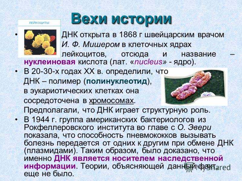 Вехи истории ДНК открыта в 1868 г швейцарским врачом И. Ф. Мишером в клеточных ядрах лейкоцитов, отсюда и название – нуклеиновая кислота (лат. «nucleus» - ядро). В 20-30-х годах XX в. определили, что ДНК – полимер (полинуклеотид), в эукариотических к