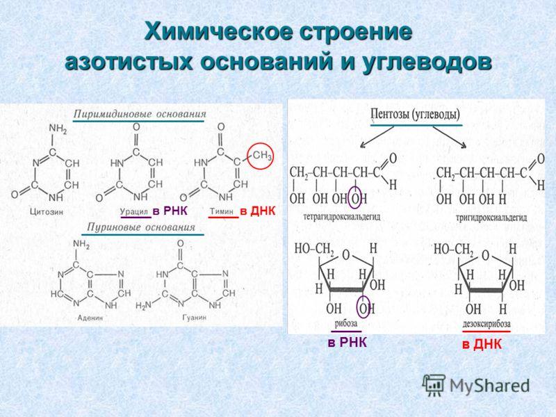 Химическое строение азотистых оснований и углеводов в РНК в ДНК в РНКв ДНК