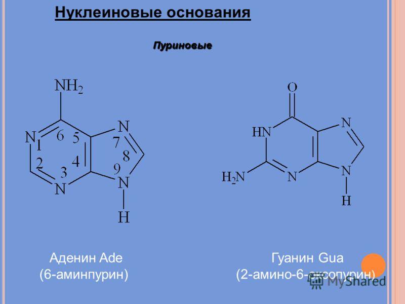 Нуклеиновые основания Пуриновые Аденин Ade (6-аминпурин) Гуанин Gua (2-амино-6-оксопурин )