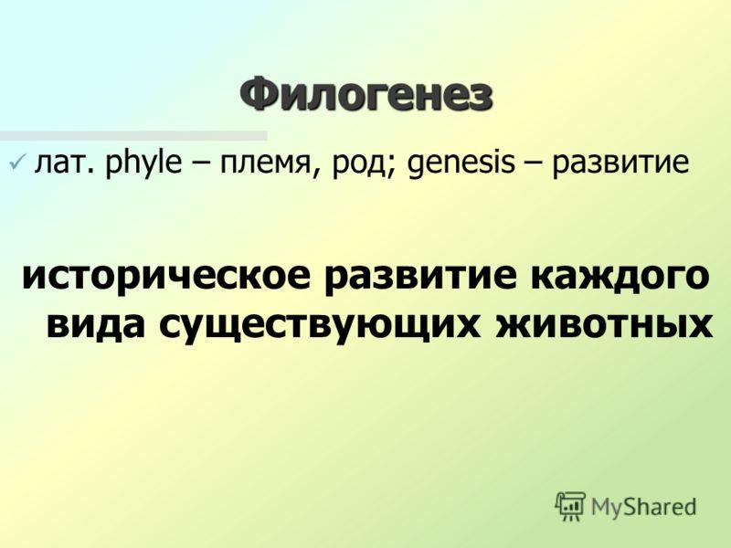 Филогенез лат. phyle – племя, род; genesis – развитие историческое развитие каждого вида существующих животных