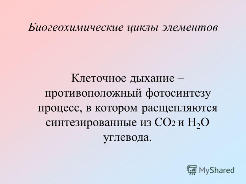 Биогеохимические циклы элементов Клеточное дыхание – противоположный фотосинтезу процесс, в котором расщепляются синтезированные из СО 2 и Н 2 О углевода.