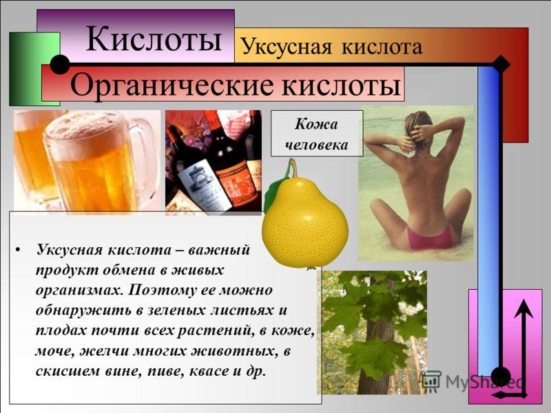 Кислоты Органические кислоты Уксусная кислота Кожа человека Уксусная кислота – важный продукт обмена в живых организмах. Поэтому ее можно обнаружить в зеленых листьях и плодах почти всех растений, в коже, моче, желчи многих животных, в скисшем вине,