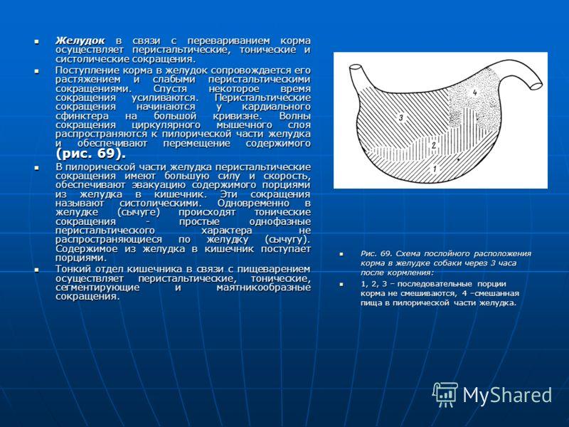 Желудок в связи с перевариванием корма осуществляет перистальтические, тонические и систолические сокращения. Желудок в связи с перевариванием корма осуществляет перистальтические, тонические и систолические сокращения. Поступление корма в желудок со