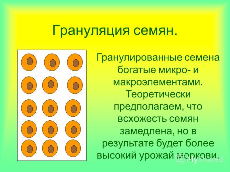 Грануляция семян. Гранулированные семена богатые микро- и макроэлементами. Теоретически предполагаем, что всхожесть семян замедлена, но в результате будет более высокий урожай моркови.