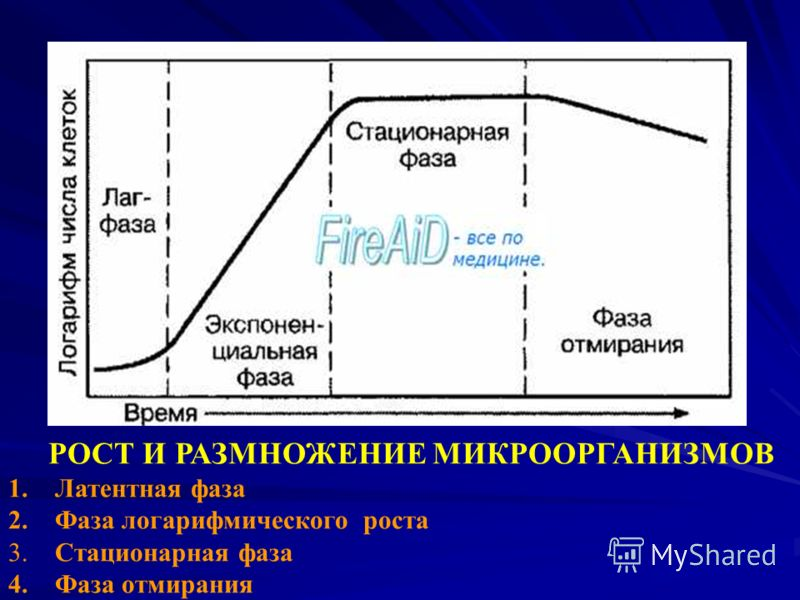 ОБЩАЯ МИКРОБИОЛОГИЯ РОСТ И РАЗМНОЖЕНИЕ МИКРООРГАНИЗМОВ 1. Латентная фаза 2. Фаза логарифмического роста 3. Стационарная фаза 4. Фаза отмирания
